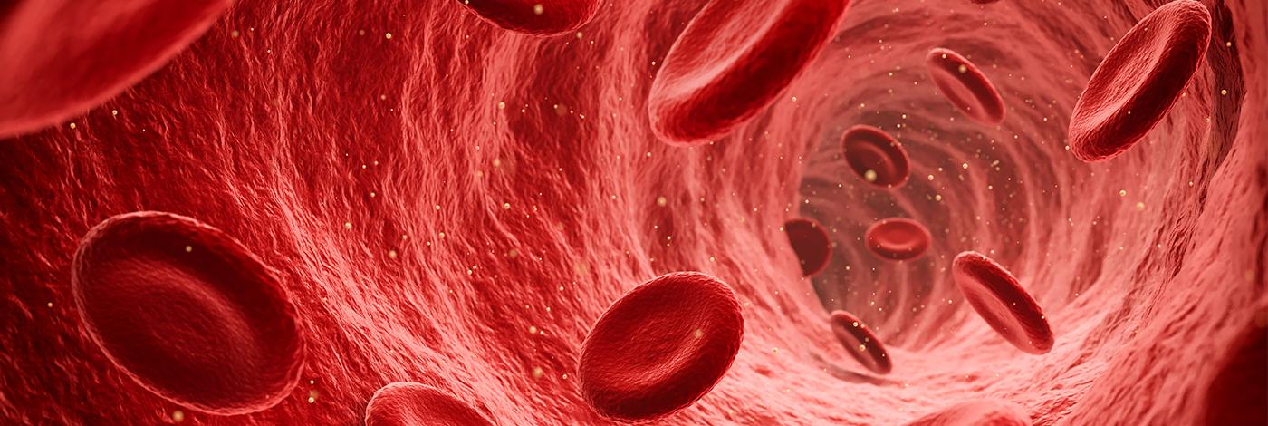 Røde blodceller i blodårene.